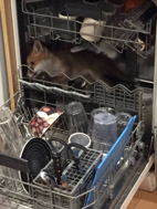 * fox-in-dishwasher.jpg